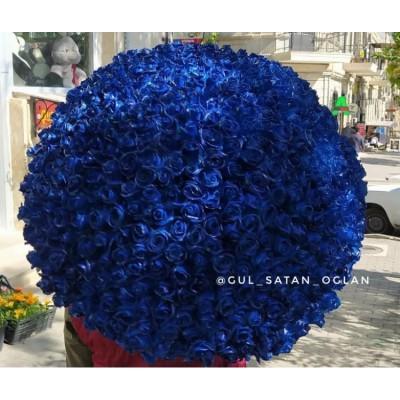 501 Mavi Qızılgül